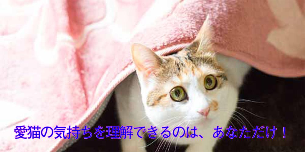 cat-2-2