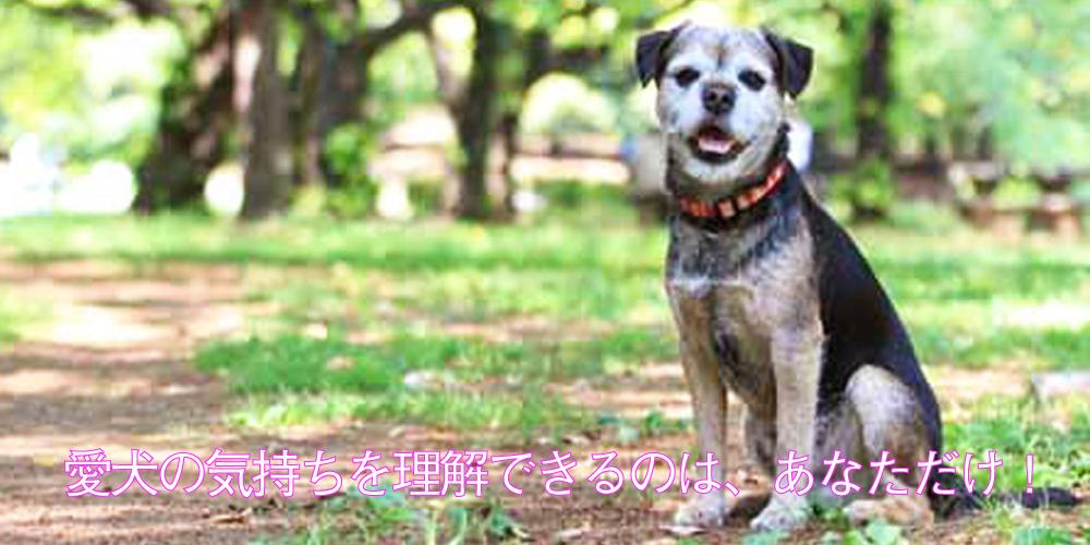 dog-1-2
