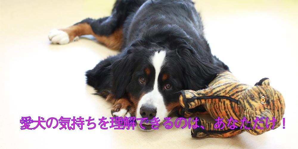 dog-4-2