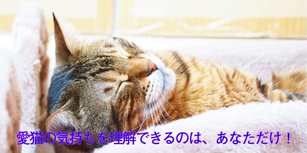 cat-1-1